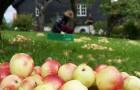 Det bugner av epler i nabohagen, vil du bli med å plukke?