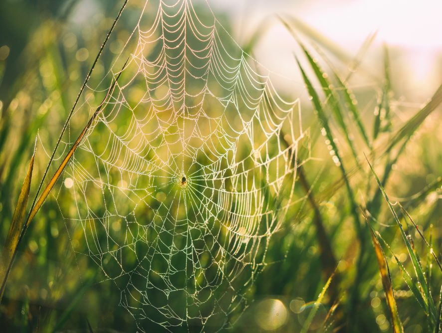 Edderkoppenes verden - som en modell for fredsarbeid