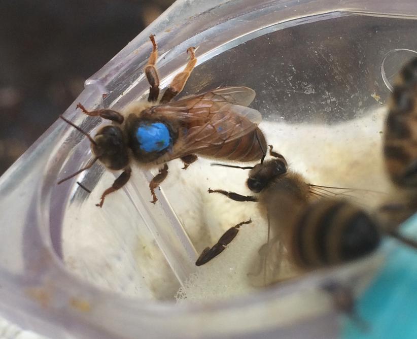 Fra arkivet: The busy bees of Oslo