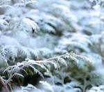 Det snør utenfor